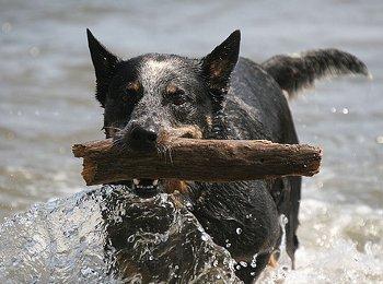 Der älteste Hund der Welt
