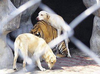 Der mutigste Hund der Welt