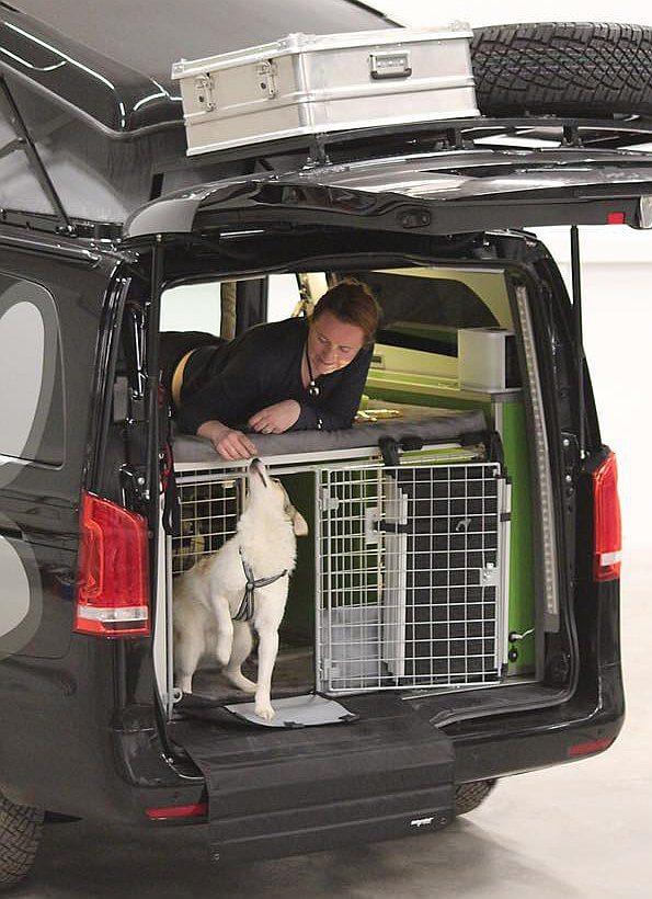 Dogscamper - der Campingbus für Hunde