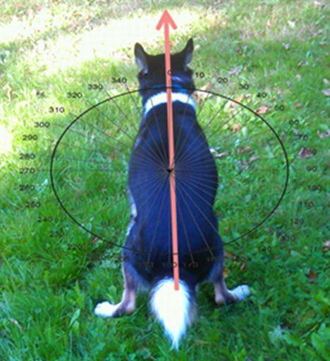Magnetsinn bei Hunden