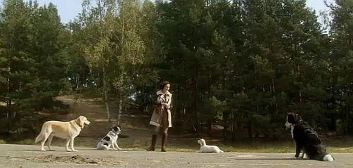 gebissene hunde bellen