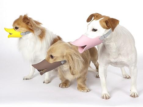 Oppo Dog Quack 1