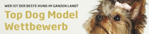 Top Dog Model Wettbewerb