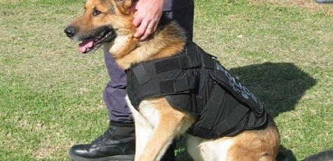 hunde schutzwesten in australien