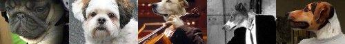 Lustige Hunde Bilder und Fotos