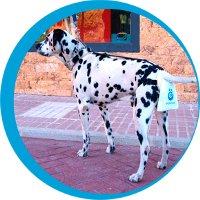 popodog hunde beutel system
