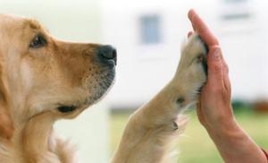 Eine gute Beziehung zwischen Hund und Mensch ist wichtig!