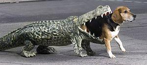 Hund in Krokodil-Kostüm.
