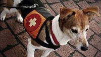 Tierarzt Telefon Hotline & Online Tierarzt