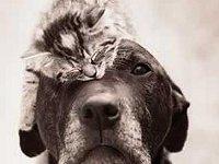 Katze und Hund - Wer hat hier einen Kater?