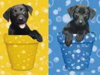 Hunder Poster - Hunde-Eintopf