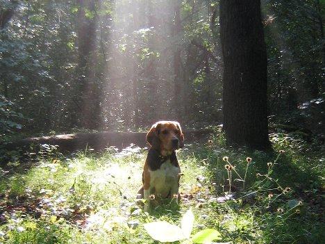 2007-08-03_freitagshundebild.jpg