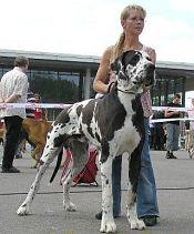 Größter Hund Deutschlands