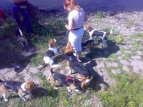 Beagle-Treffen Dresden