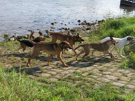2007-09-07_freitagshundebild.jpg