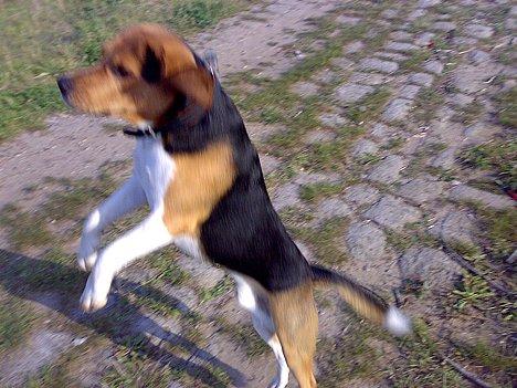 2007-09-21_freitagshundebild.jpg