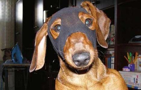 Superhund mit Maske