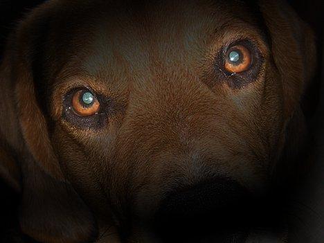 Beagle bei Nacht