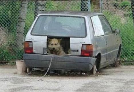Einzigartige Hundehütte