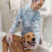 Duschvorhang für Hunde