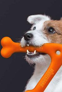 Wooferang, der Bumerang für Hunde