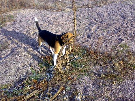 Schlechtes Versteck für einen Hund