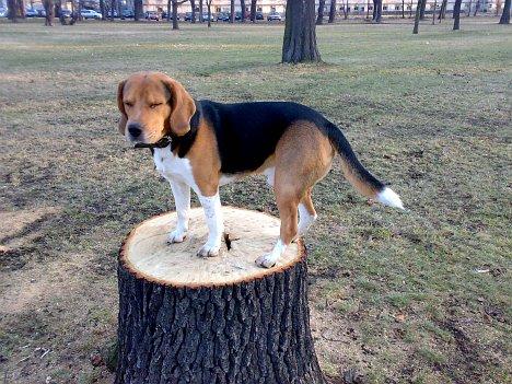 (Hunde-) Müdes Model