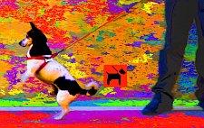 Tracker Dog - Der Hund wird zum Herrn