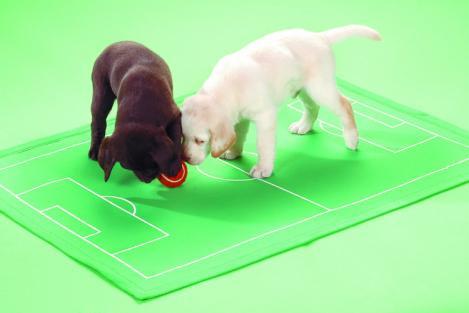 Fußball Fanartikel für Hunde