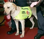Manny, der Hund der Raubkopien erschnüffeln konnte