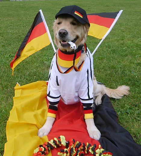 Hund im Fußballtrikot