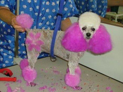 Hund als Blume
