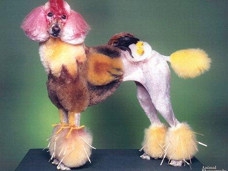 Hund als Huhn