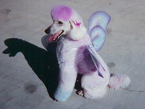 Hund mit Flügel