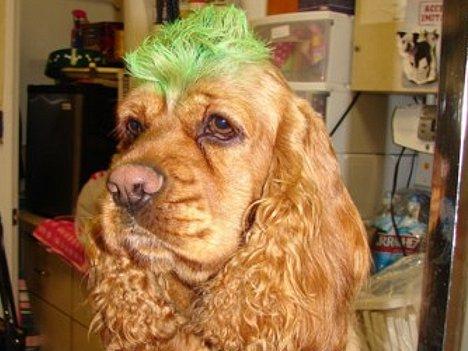 Punker Hund