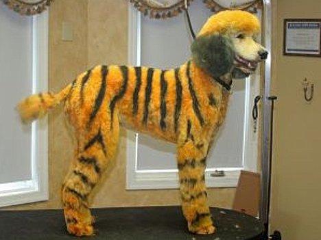 Hund als Tiger