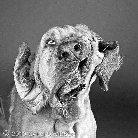Schüttelnder Hund 2