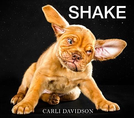 Carli Davidson - Shake