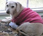 Chanel - Der älteste Hund der Welt