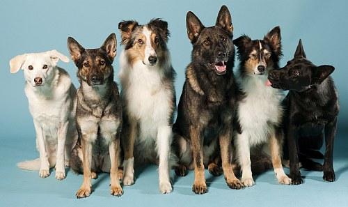 Dogs Award 2011 - das DOGS Magazin sucht Deutschlands Superhund