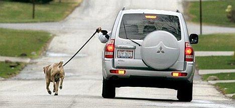 Dog vs. SUV
