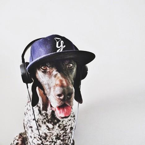 Hund mit Basecap