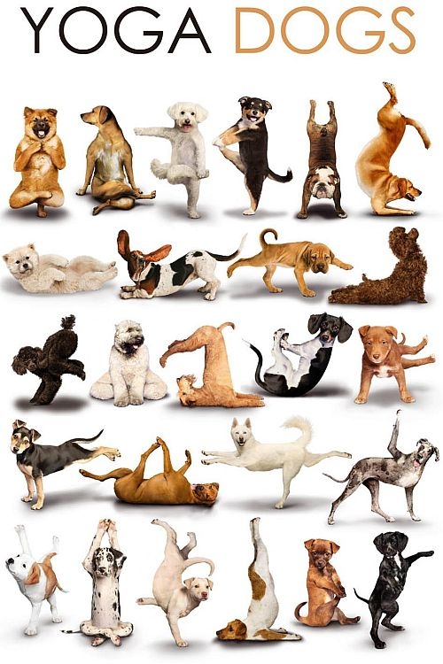 Dog + Yoga = Doga