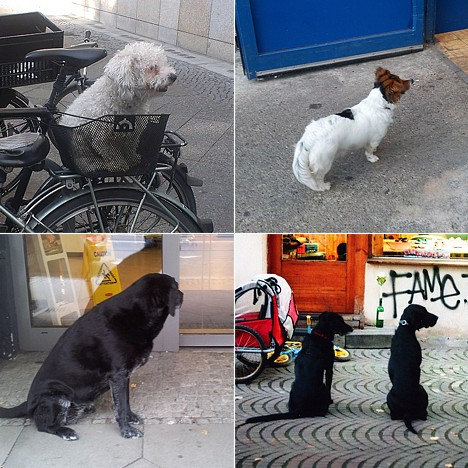 dogs waiting in berlin