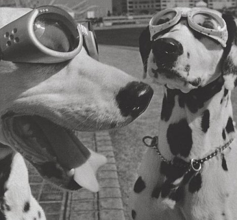 Elliott Erwitt- Dogs