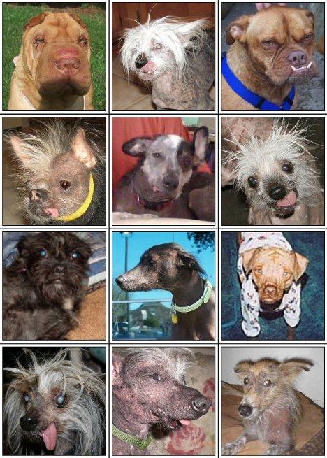 Häßlichster Hund der Welt 2009