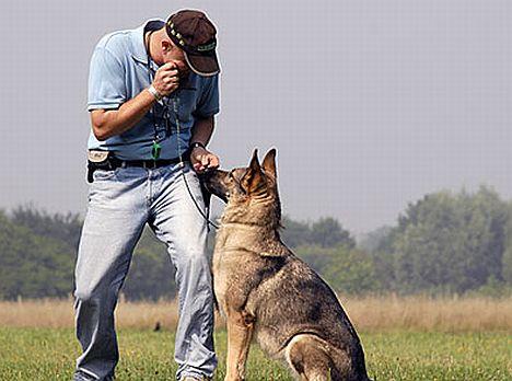 Holger Schüler - der Hundeversteher