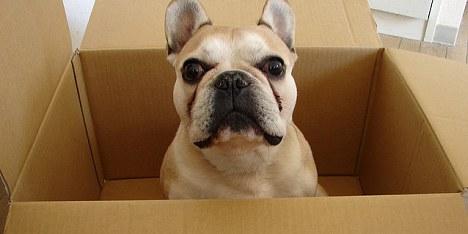 Hund mit der Post versendet