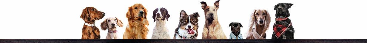 Hunde-Bar, das Hund & Herrchen Weblog