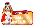 Hunde Casting Deutschland